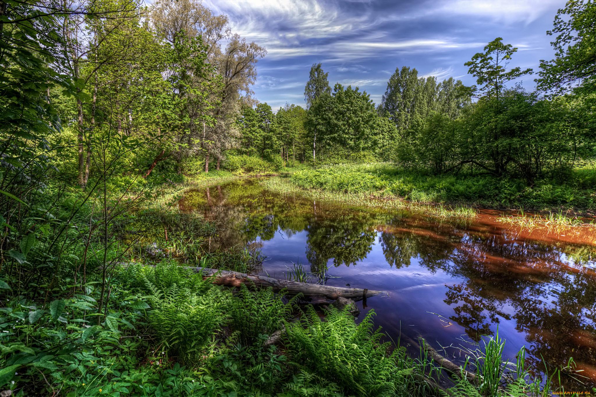 Картинки природа речки